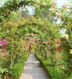 フラワー ガーデンの写真・画像素材[881187]