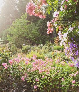 庭いっぱいの花の写真・画像素材[881188]