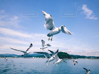 水の体の上を飛んでカモメの群れの写真・画像素材[881530]