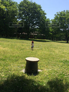 広い公園の写真・画像素材[884072]