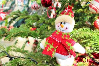 クリスマス ツリーの飾り付けの写真・画像素材[916337]