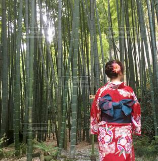 鎌倉散策の写真・画像素材[1584688]