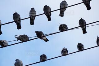 電柱にとまる鳩の群れの写真・画像素材[882456]