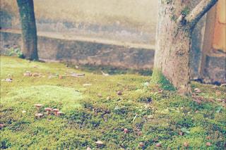 苔の世界の写真・画像素材[908826]