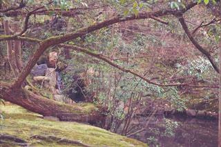 雑木林の木の写真・画像素材[909179]