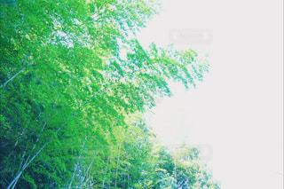 近くの木のアップの写真・画像素材[910584]