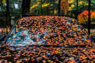 車の上の紅葉の写真・画像素材[882235]