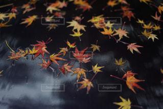 黒に落ちる秋の写真・画像素材[882425]