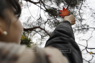 枯れ木に紅葉を咲かせましょうの写真・画像素材[882426]