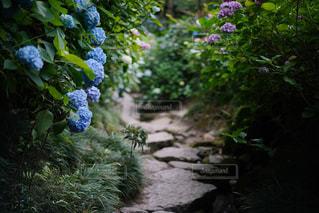 紫陽花のある小道 - No.953389