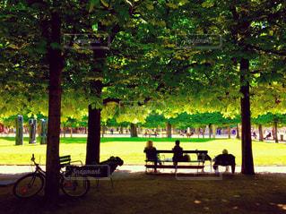 パリ・チュイルリー公園の昼下がりの写真・画像素材[882488]