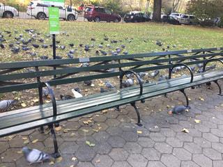 公園で餌付けされる鳩たちの写真・画像素材[882548]