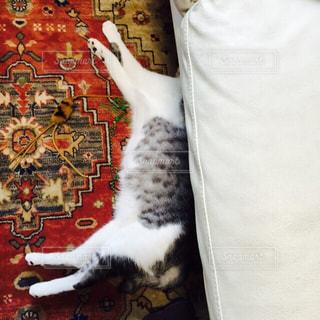 頭隠して尻隠さずな猫の写真・画像素材[882679]