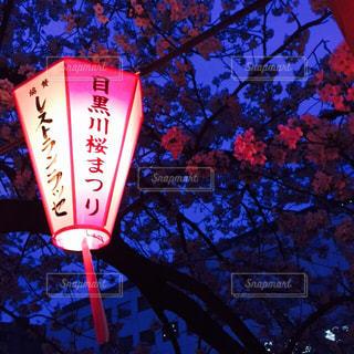 目黒川の夜桜の写真・画像素材[1000854]