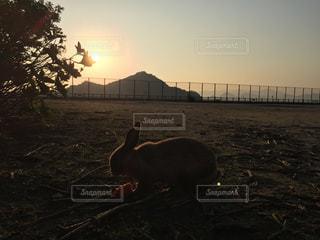 夕焼けの中のうさぎの写真・画像素材[1002153]