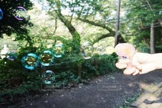 森の中のバブルガン2の写真・画像素材[3538367]