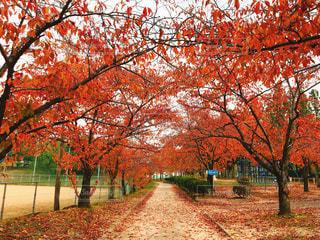 公園の大きな木 - No.882958