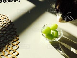 プレートの上に座って猫 - No.883891