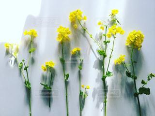 春の花摘みの写真・画像素材[883925]