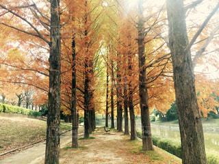 フォレスト内のツリーの写真・画像素材[884607]