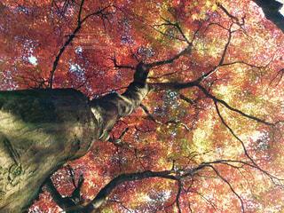 近くの木のアップの写真・画像素材[884608]