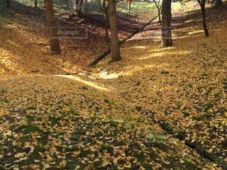 森の写真・画像素材[884610]