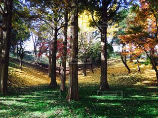 雑木林の木の写真・画像素材[884611]