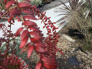 秋の赤い葉の写真・画像素材[892722]