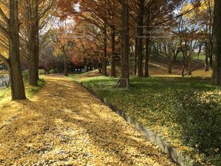 公園の木の写真・画像素材[920532]