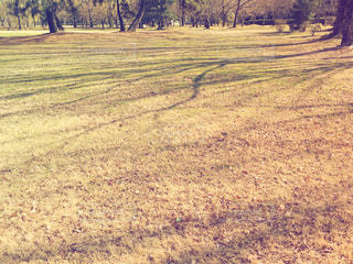 木の影の写真・画像素材[1021684]