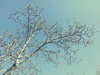 春を待つ木の写真・画像素材[1021686]