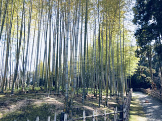竹林の写真・画像素材[1022805]