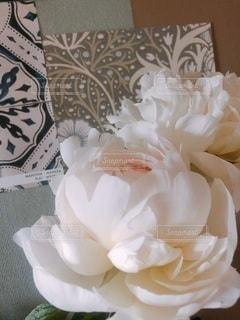 花のクローズアップの写真・画像素材[3385138]