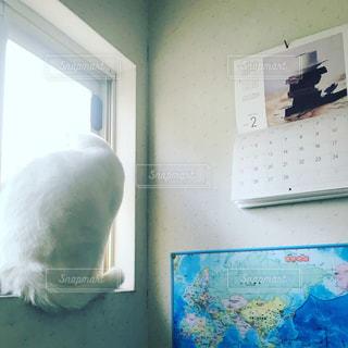 窓から外の景色を眺める猫の写真・画像素材[1025745]