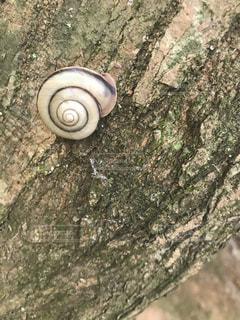 木とカタツムリまいまいの写真・画像素材[883533]