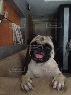 犬の写真・画像素材[11943]