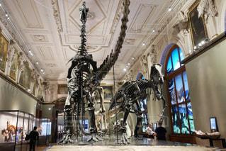 ウィーン  自然史博物館の写真・画像素材[883814]
