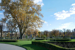 ウィーン の公園の写真・画像素材[883836]