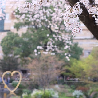 花とハートの写真・画像素材[1092704]