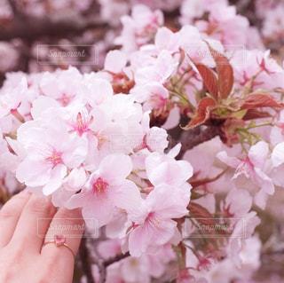 近くの花のアップの写真・画像素材[1155692]