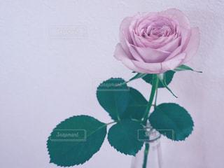 ピンクの花で一杯の花瓶の写真・画像素材[1157203]