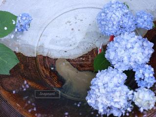 紫陽花の写真・画像素材[1157206]