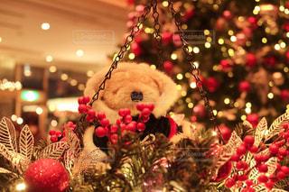 クリスマス ツリーの写真・画像素材[1649859]
