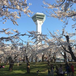 桜と五稜郭タワーの写真・画像素材[884508]