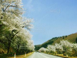 春のカントリーロードの写真・画像素材[884887]