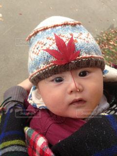 カエデの赤ちゃんの写真・画像素材[885790]