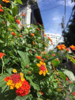 近くのフラワー ガーデンの写真・画像素材[884806]