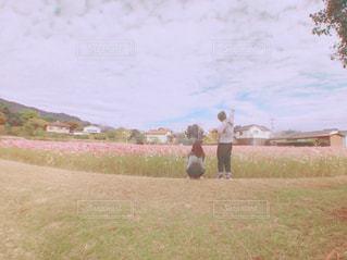 コスモス畑の写真・画像素材[884898]
