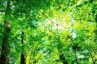 自然の写真・画像素材[29572]