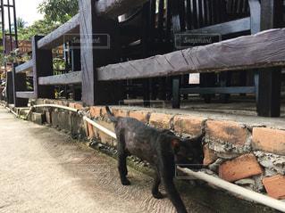 黒猫の写真・画像素材[885190]